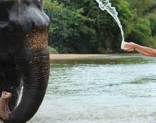 Elephant Sanctuary_6.jpg