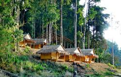 Jungle Hut 2019-20