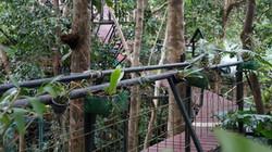 Khao Sok Khao Lak Tree House_07