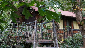 Khao Sok Khao Lak Tree House_08