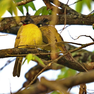 Bird Watching Khao Lak