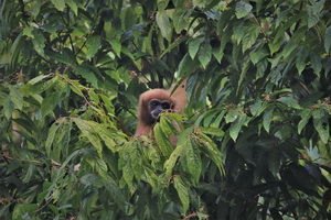 Khao Sok Wildlife_08