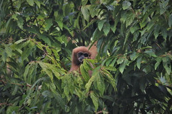 Khao Sok Wildlife_08