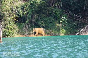 Khao Sok Lake_33