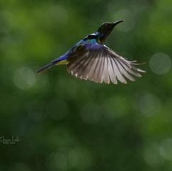 Birding in Khao Lak