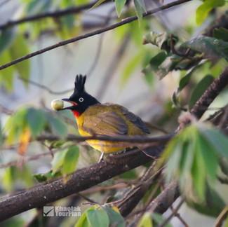 Birding Khao Lak