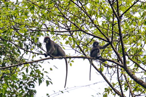 Khao Sok Wildlife_11