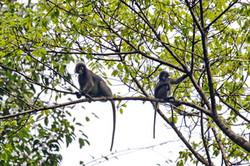 Khao Sok Wildlife_11