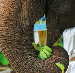 Elephant Bath_5.jpg