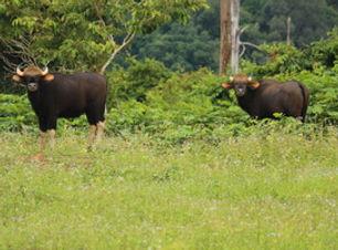 Khao Sok Wildlife_05.jpg