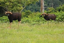 Khao Sok Wildlife_05