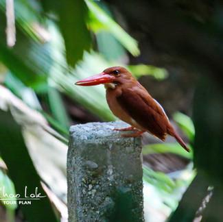 Khao Lak Birding