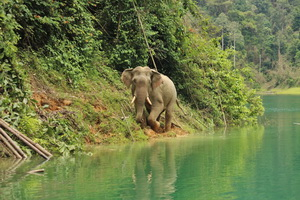 Khao Sok Wildlife_04