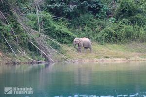 Khao Sok Lake_36