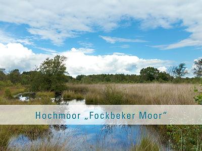 Das Fockbeker Moor