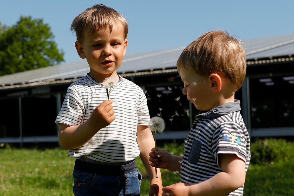 Pusteblume wird von zwei Jungs angepustet