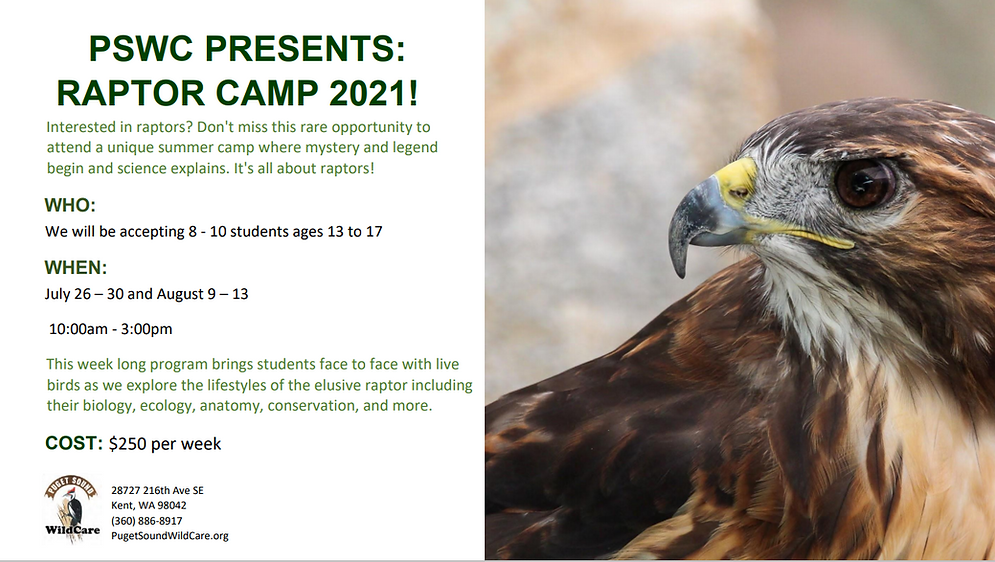 raptor camp 2021 updated.png