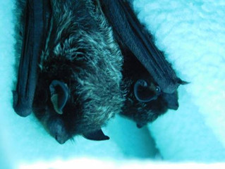 Winter and Bats