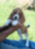2019-09-30 Beagle M 3489 Lucy.JPG