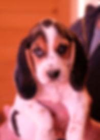 2019-01-05 Beagles M639  Camo Batman (84