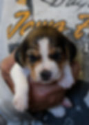 2020-05-07 Beagles F2 1 Penny Batman.jpg