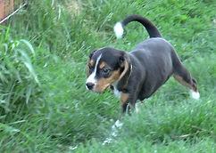 2020-05-06 Beagles F5976 Camo Buddy (10)