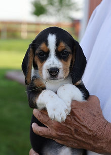 2021-06-02 Beagles F3 1 Camo Buddy (4).j