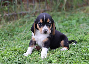 2021-05-24 Beagles M2 2 Camo Buddy (142)