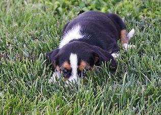 2021-06-02 Beagles F3 3 Camo Buddy (6).j