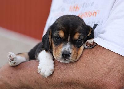 2021-06-01 Beagles F1 4 Willow Buddy (17