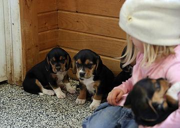2021-03-13 Beagles Mia 4 Skye Buddy(206)