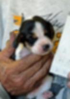 2020-05-07 Beagles M4 1 Penny Batman.jpg