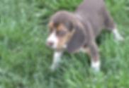 2020-05-06 Beagles M5975 Camo Buddy (5)_