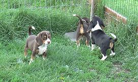 2020-05-06 Beagles M5974 Camo Buddy (6)_