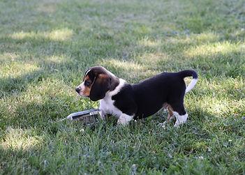 2021-06-13 Beagles M2856 Camo Buddy (4).
