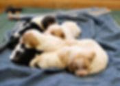 2020-05-07 Beagles Penny 3.jpg