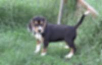2020-05-06 Beagles F5964 Camo Buddy (5)_