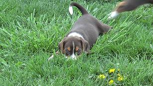 2020-05-06 Beagles M5974 Camo Buddy (5)_