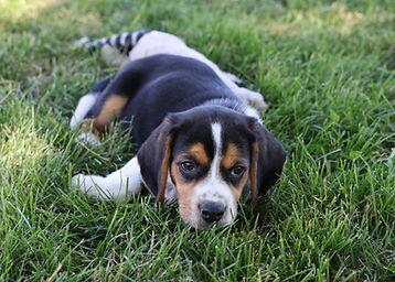 2021-06-13 Beagles M2856 Camo Buddy (17)