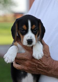 2021-06-02 Beagles F2 2 Camo Buddy F2 (3
