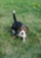 2019-09-02 Beagle 3499_8.JPG