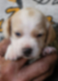 2020-05-07 Beagles M5973 1.jpg