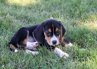 2021-06-13 Beagles M2843 Camo Buddy (13)