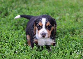 2021-05-24 Beagles F1 4 Camo Buddy (38).