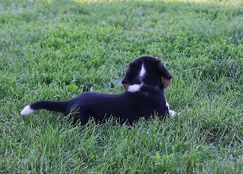2021-06-02 Beagles M1 4 Camo Buddy (27).