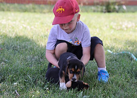 2021-06-19 Beagles  7 Willow Buddy (69).jpg