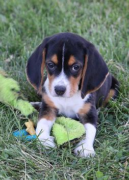 2021-06-13 Beagles M2843 Camo Buddy (18)
