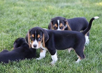 2021-06-13 Beagles M2843 Camo Buddy (11)