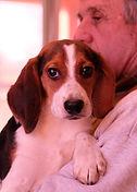 2018-12-05 Beagles (565)Rachel Berner re