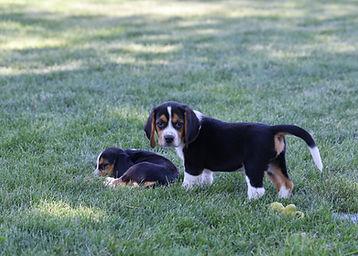 2021-06-13 Beagles M2856 Camo Buddy (7).